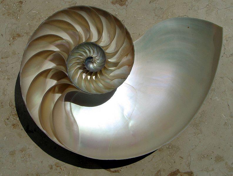 log shell