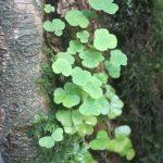 tree_plant